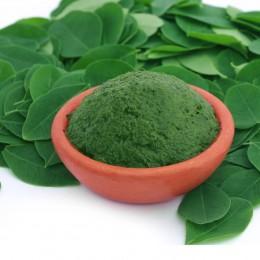Moringa Blätter und Pulver