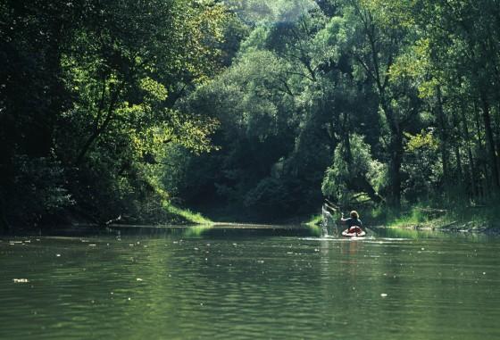 Donau Auen