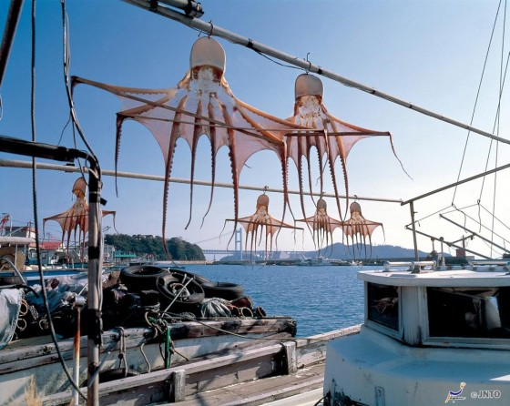 Oktopusse im Hafen von Shimotsui