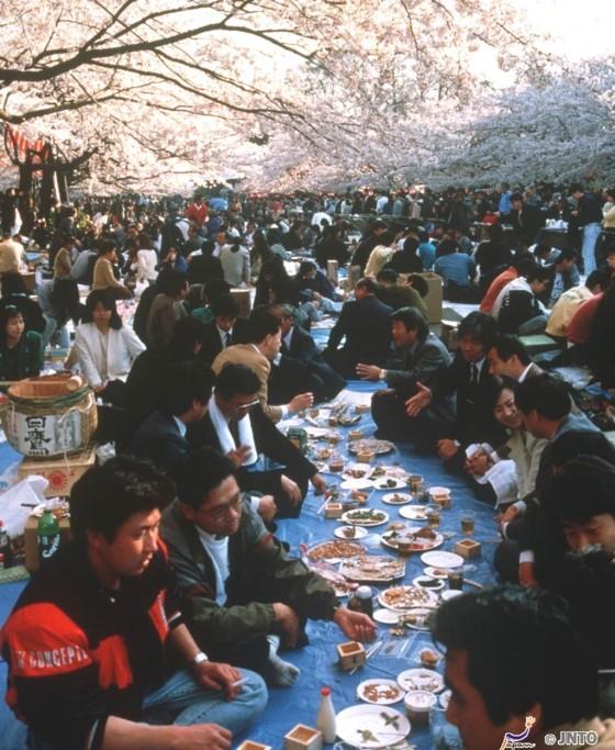 Picknick während der Kirschblüte