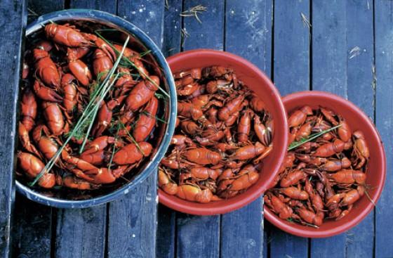 Schüsseln mit feuerroten Flusskrebsen sind das Highlight auf jedem finnischen Sommerfest.