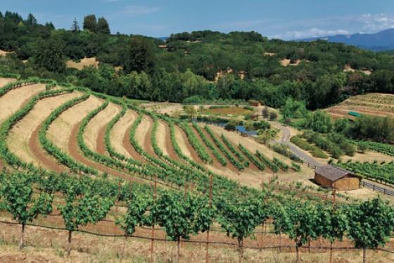 Das stille Sonoma Valley eignet sich hervorragend für idyllische Weintouren.
