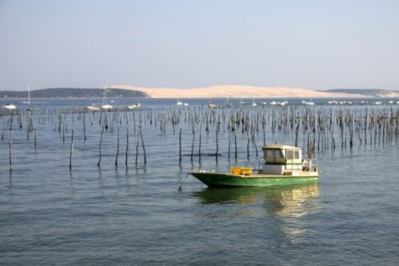 Im Becken von Arcachon werden Austern angepflanzt