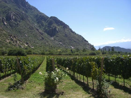 Wein in Cafayete