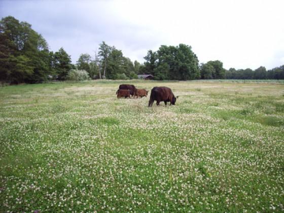 Im Frühling verwandeln sich die Weiden auf dem Hof Wümmetal in ein Blütenmeer.