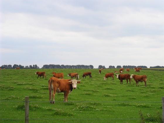 Herford Rinder Landwert Hof
