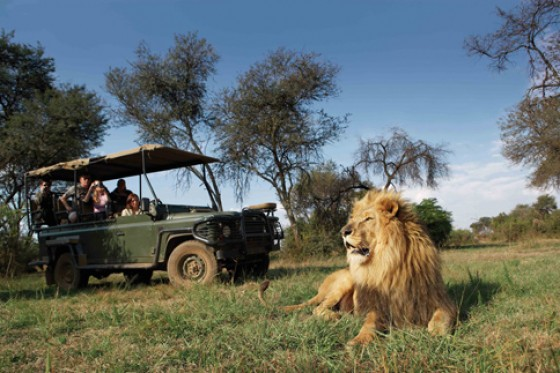 Safari im Kruger Park