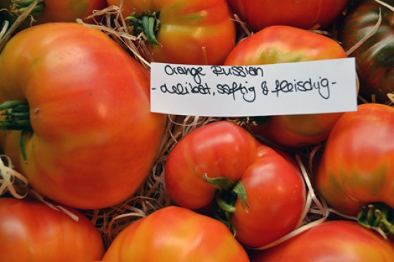 Tomaten Orange Russian