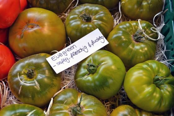 Tomaten Evergreen