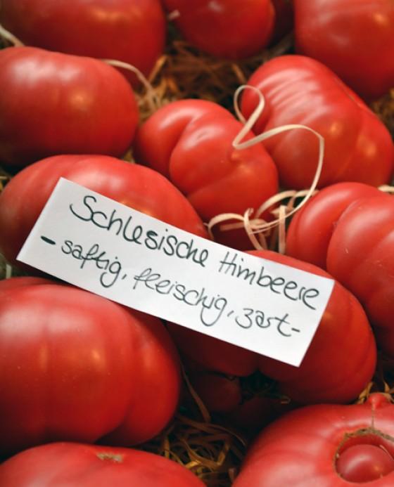 Tomaten Schlesische Himbeere