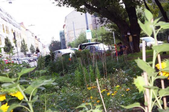 Nachbarschaftsgarten Heigerlein in Wien