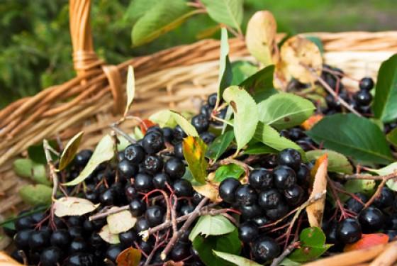 Vitaminreiche Beeren wie Aronia, Maulbeere oder Acerola werden wir 2013 in vielen Säften wiederfinden. Gesüßt wird in diesem Jahr gerne mit Stevia.
