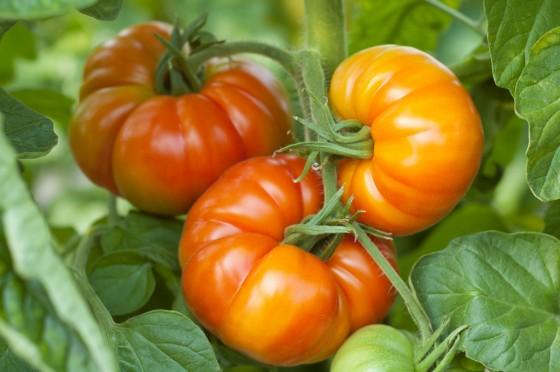 Vierländer Platte Tomaten von Sannmann
