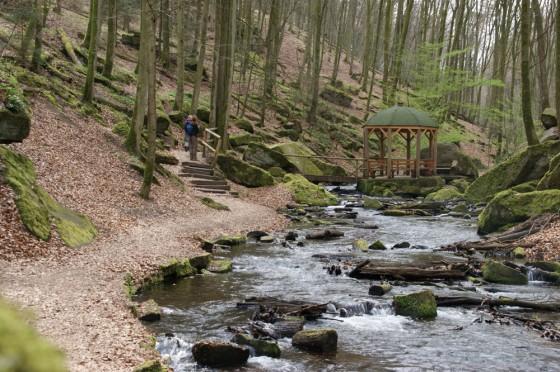Pfalz Karlstal Waldpfad