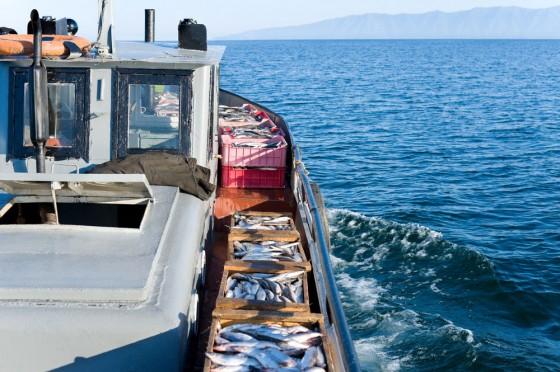 Fisch vom Kutter