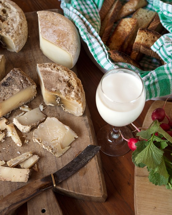 Bio-Rohmilchkaese-Ziegenfarm-Ales-Winkler-Istrien