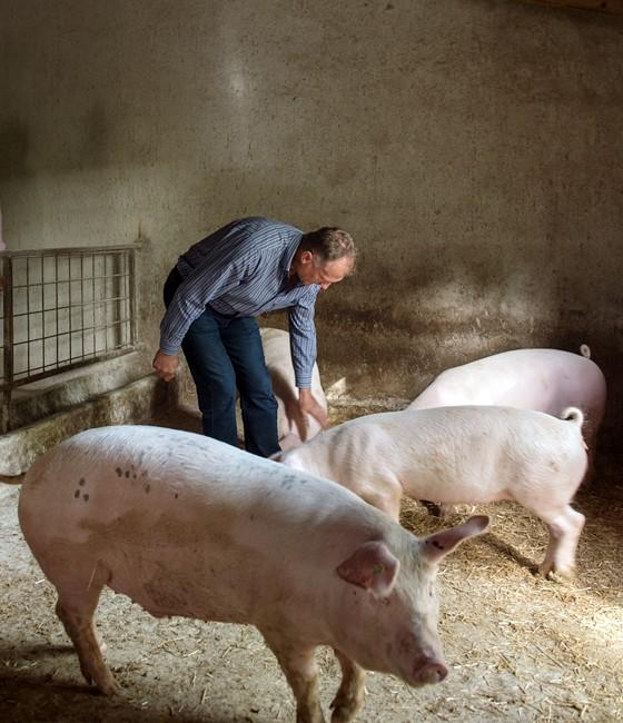 Dordando-Fatorić-Kay-Schweinestall-mit-Schweinen-Familienbetrieb-Istrien