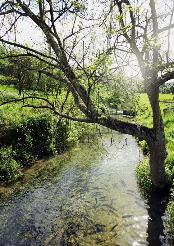 Bach-Fontanelle-führt-zu-Forellenfänger-Marc-Genet-Normandie