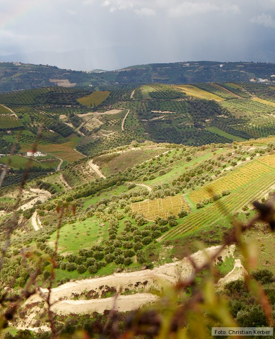 kulinarische-Reise-Kreta-Weinberge