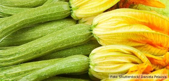 grüne Zucchini mit weiblicher Blüte